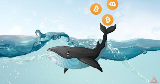Cá voi Bitcoin là ai? Và cách mà họ thao túng thị trường
